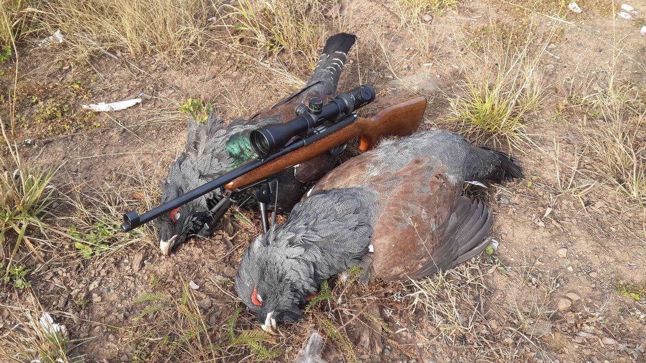 Охота с CZ-452