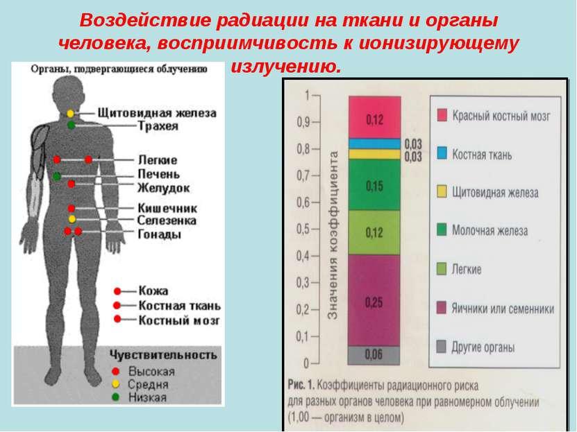 Устойчивость тканей и органов